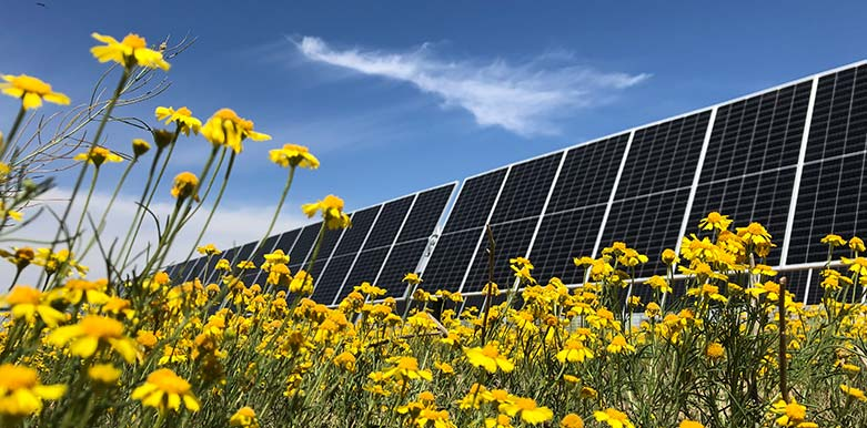 Solar panels on the field with yellow flowers