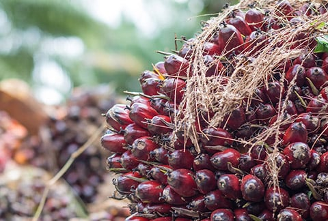 What is Nestlé doing to ensure palm oil is sourced sustainably?