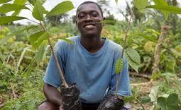 Ivorian farmer