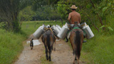 Horses carrying milk tins