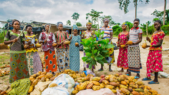 A group of women with a large amount of cacao pods