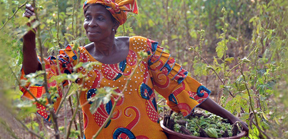 Women's empowerment in cocoa-growing communities