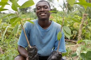 Farmer in Côte d'Ivoire with cocoa plants