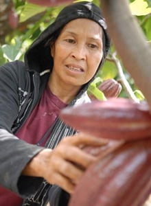 Cocoa farmer in Indonesia