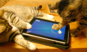 Cats playing Friskies' games on the iPad