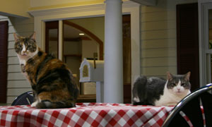 Rocki and Ava, the Purina Learning Center's live-in cats