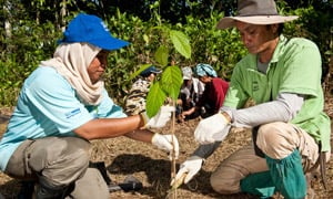 malaysia reforestation project