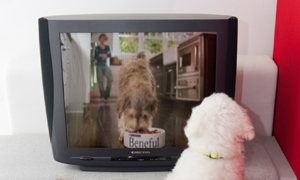 Nestlé Purina TV commercial for dogs