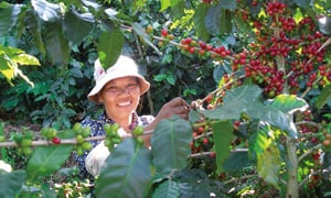 Coffee farmers in Yunnan province