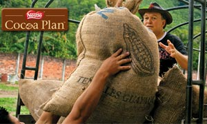 Good-quality sustainable Nestlé Cocoa Plan crop