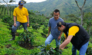Agronomists advise an AAA Programme coffee farmer