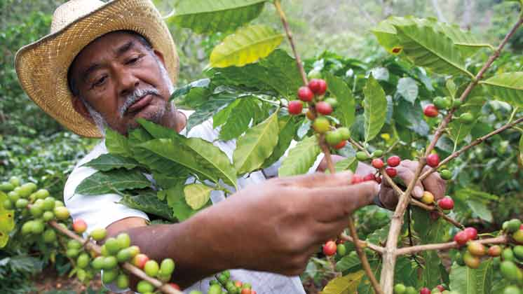 Improving the lives of coffee farmers <br>