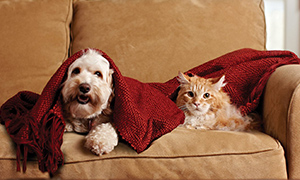 a dog and a cat on a couch