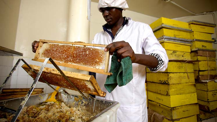 Honey Care Africa wins share of CHF 500,000