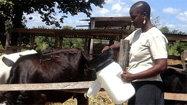 Partnership for small dairy farmers