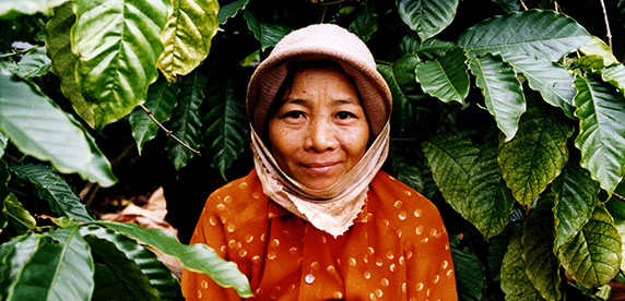Vietnamese farmer in coffee fields