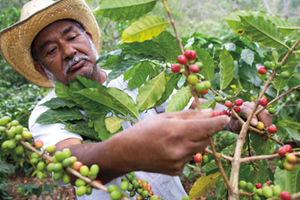 Coffee Farmer in Mexico