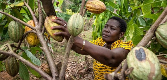 A woman working on a cocoa farm in Côte d'Ivoire