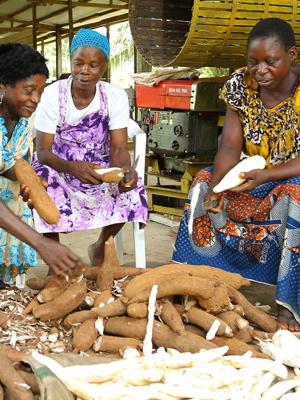 Women peeling cassava
