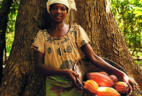 Forests, cocoa and farmers