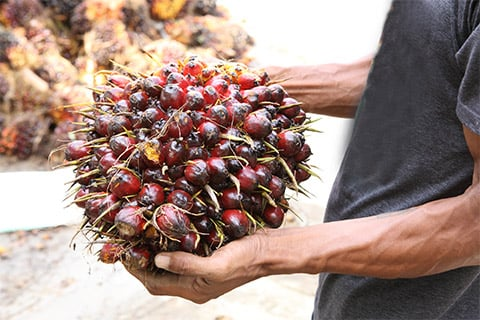 Human-rights-palm-oil