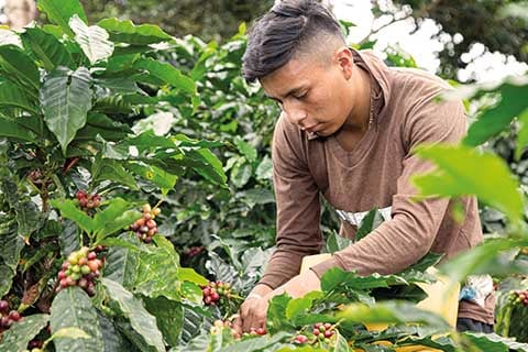 young coffee farmer